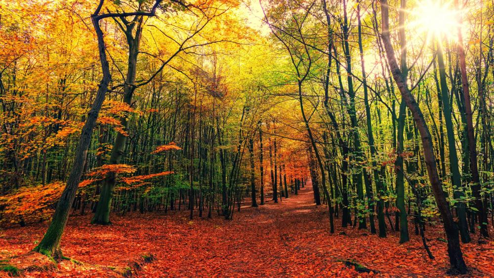 Forest trail at fall wallpaper