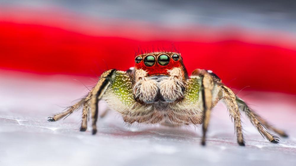 Spider eyes wallpaper