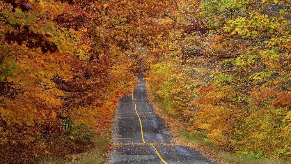 Road under the fall foliage wallpaper