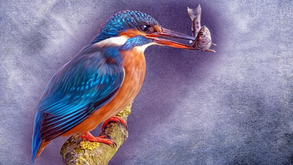 Common kingfisher pictorial art wallpaper