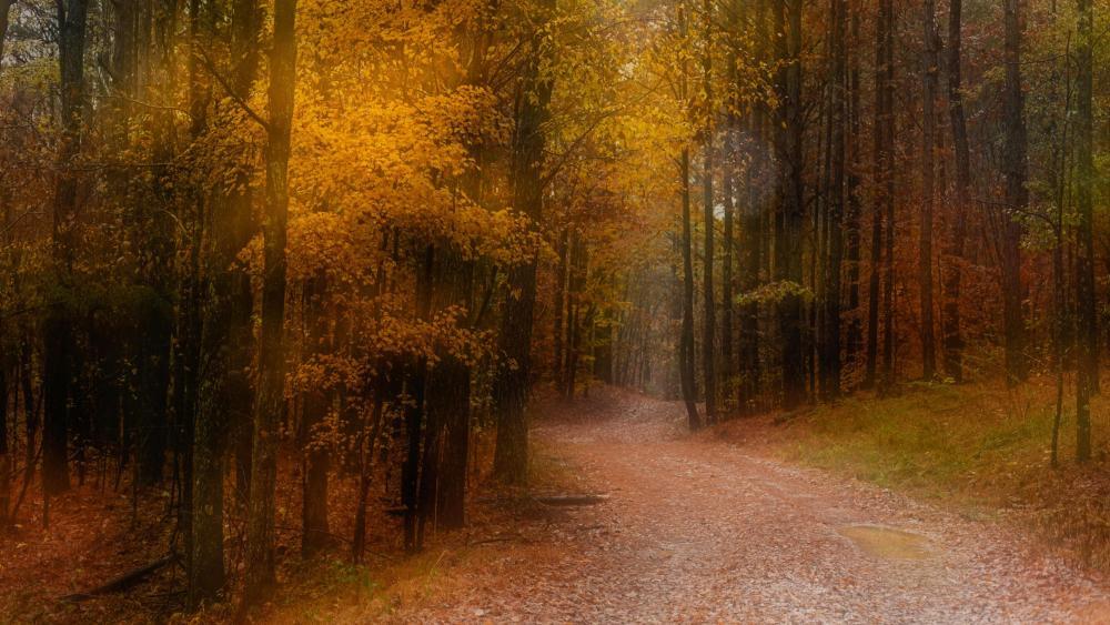 Autumn forest trail wallpaper