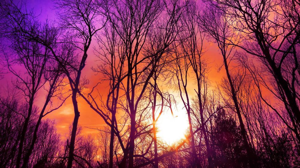 Purplish sunset wallpaper