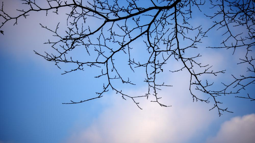 Sky among the branches wallpaper