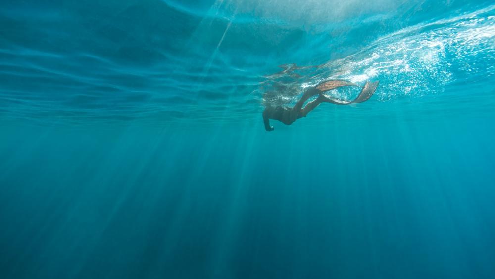Underwater view wallpaper
