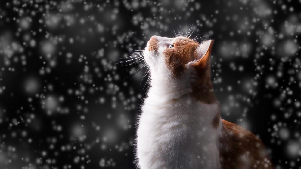 Cat in the snowfall wallpaper