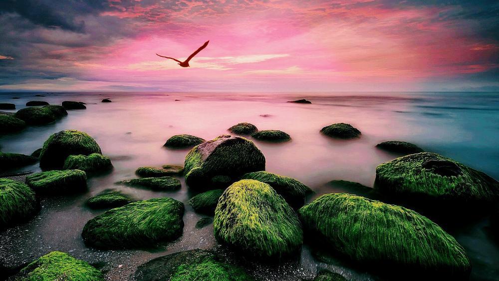 In flight on the sea wallpaper