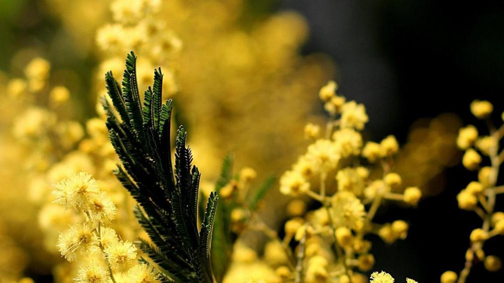 Yellow effect wallpaper