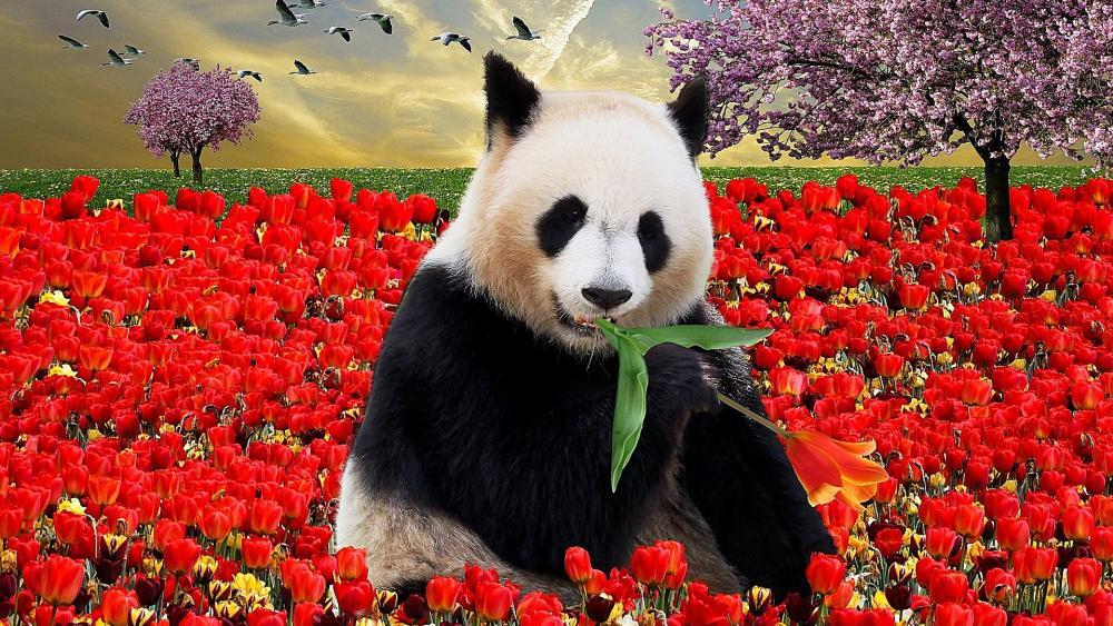 Panda and red tulips wallpaper