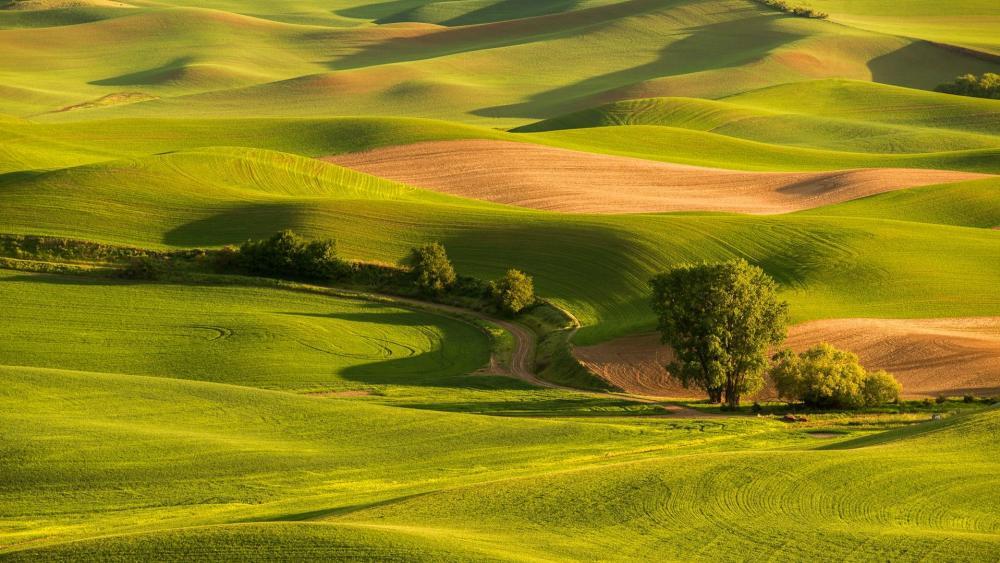 Rolling green hills wallpaper