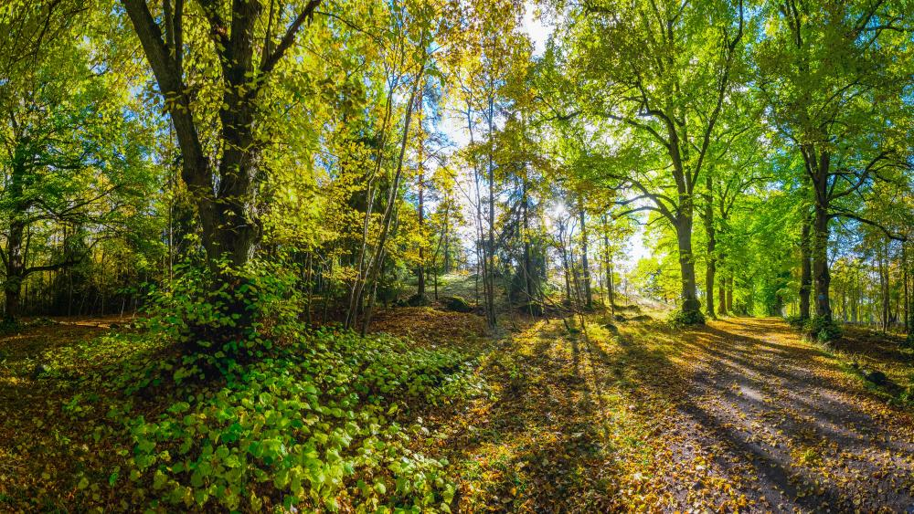 Early autumn forest wallpaper