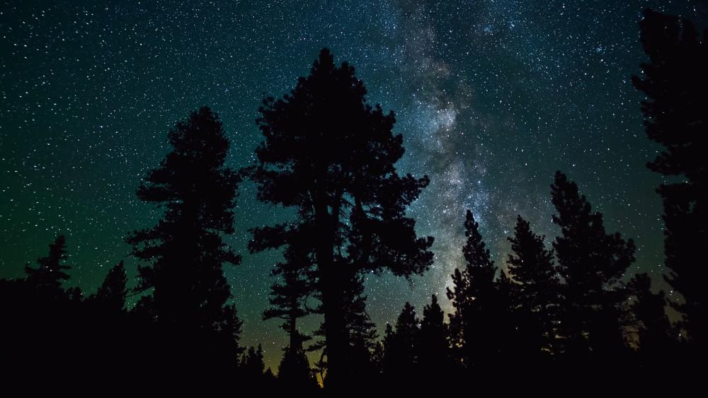 Milky way above the forest wallpaper
