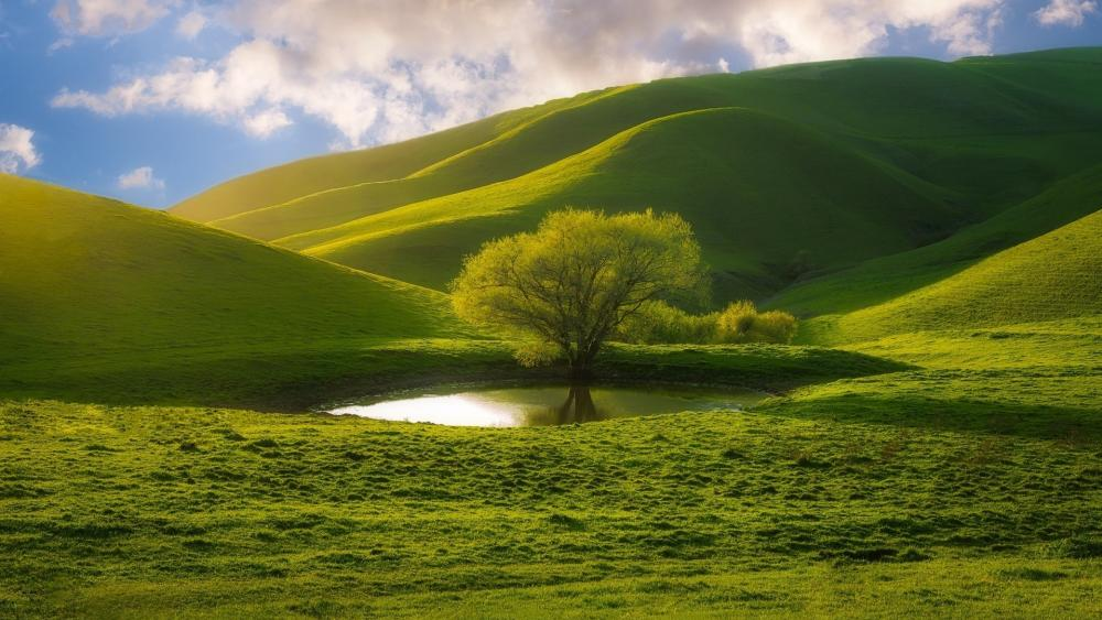 Lone tree at the pond wallpaper