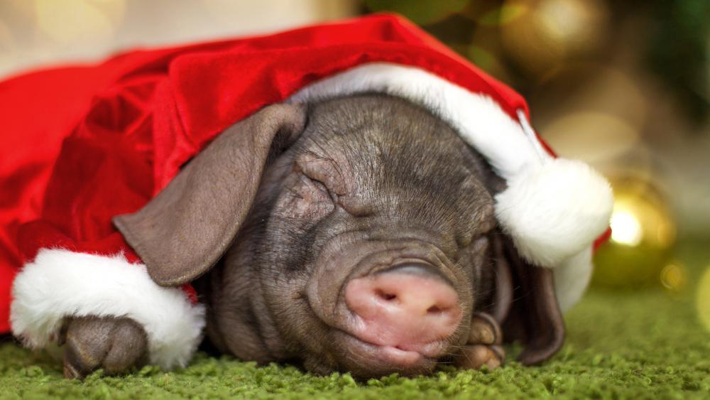 New Year Santa Pig wallpaper