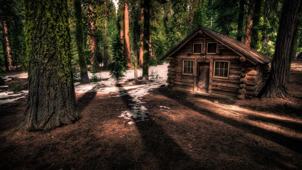 Forest shelter in Yosemite National Park, California wallpaper