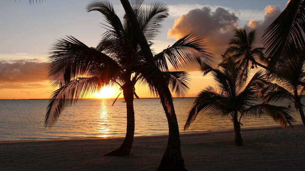 Palms in the sunset (Andros, Bahamas) wallpaper