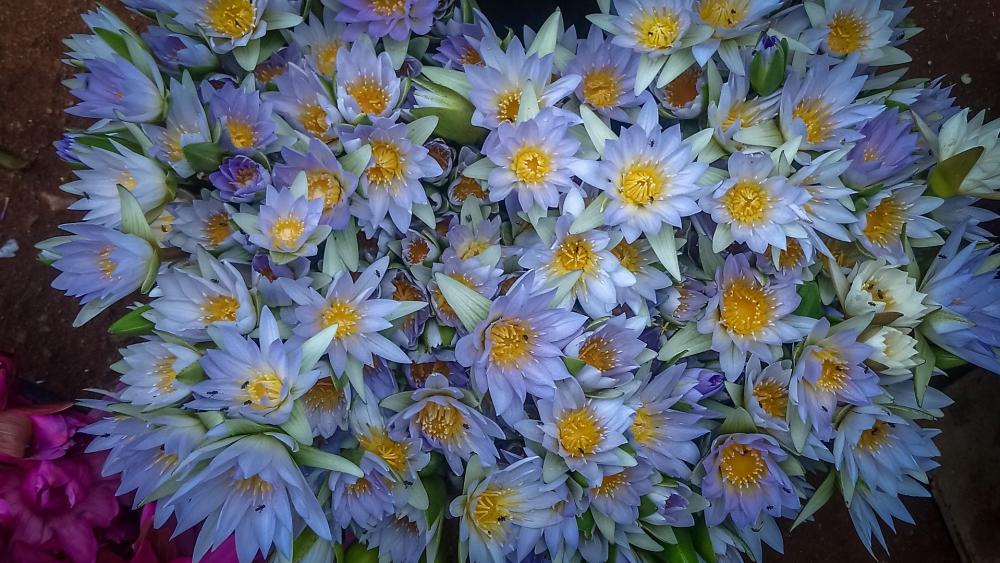 Light blue lilies wallpaper