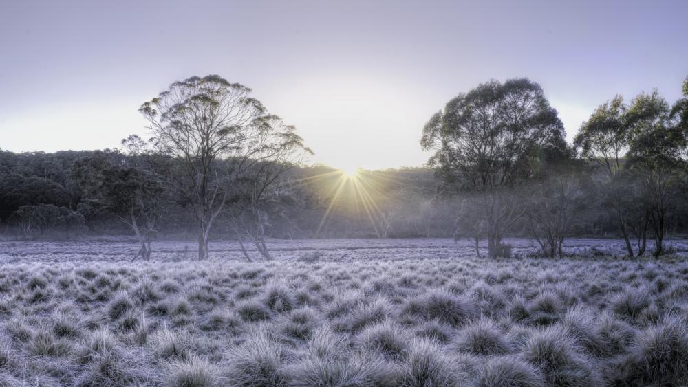 Barrington Tops National Park winter sunrise wallpaper