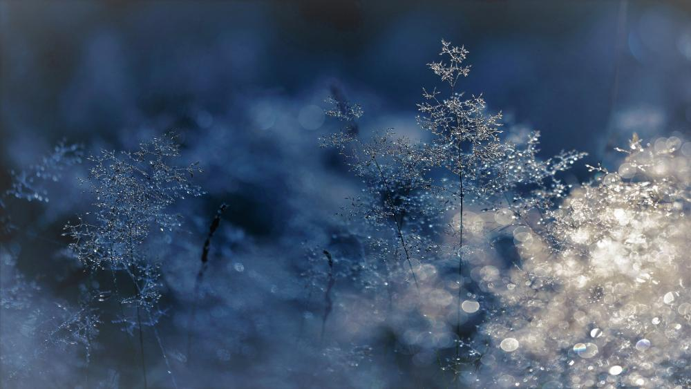 Winter cold wallpaper
