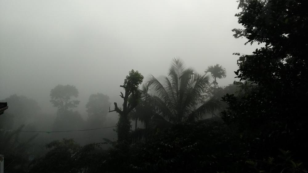 Morning misty wallpaper