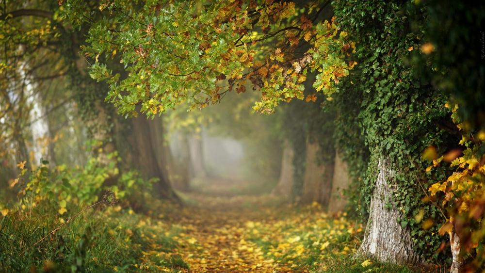 MagicaltTree tunnel at fall wallpaper