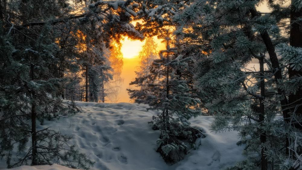 Snowy forest trail wallpaper