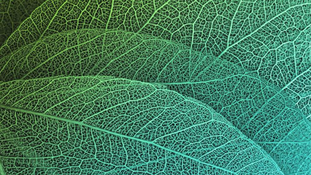 Texture of Leaf wallpaper