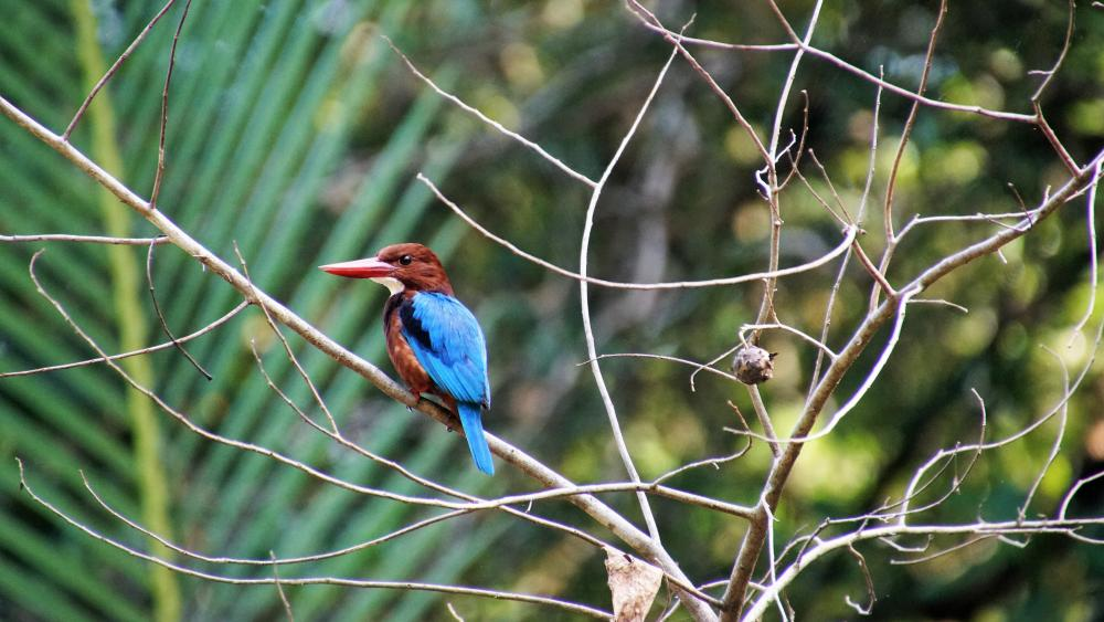 Kingfisher in the jungle wallpaper