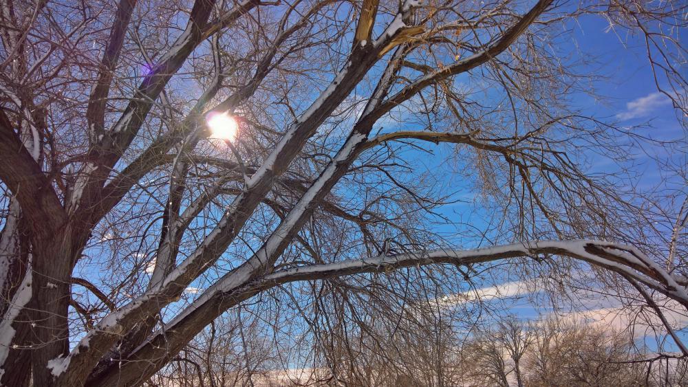 Sunlit Tree wallpaper