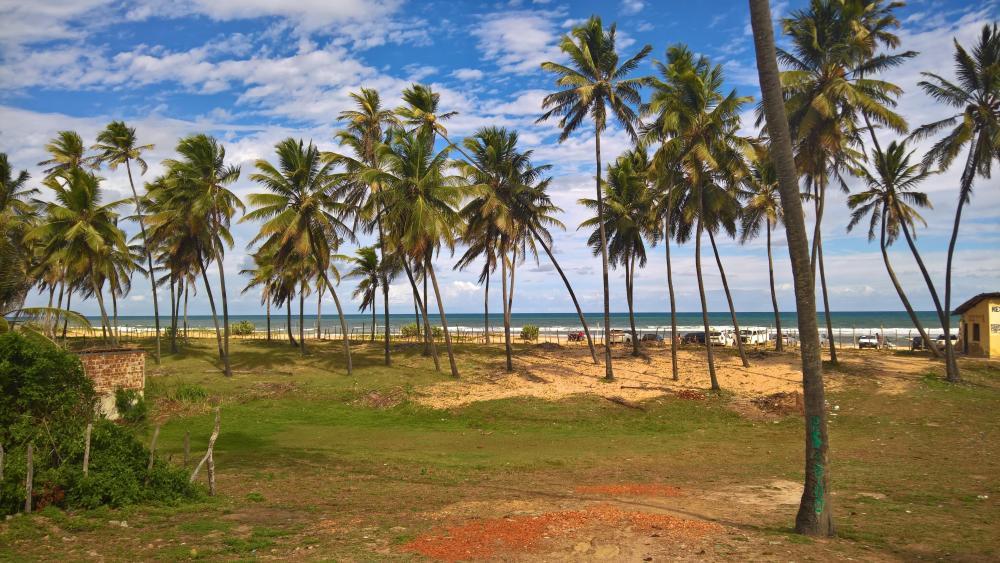 Coconut Grove wallpaper