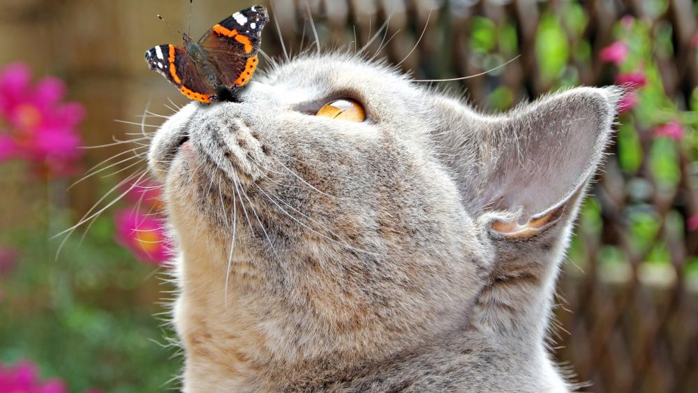 Cat with butterfly on nose wallpaper