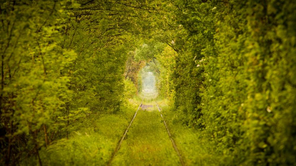 Tunnel of Love (Ukraine) wallpaper