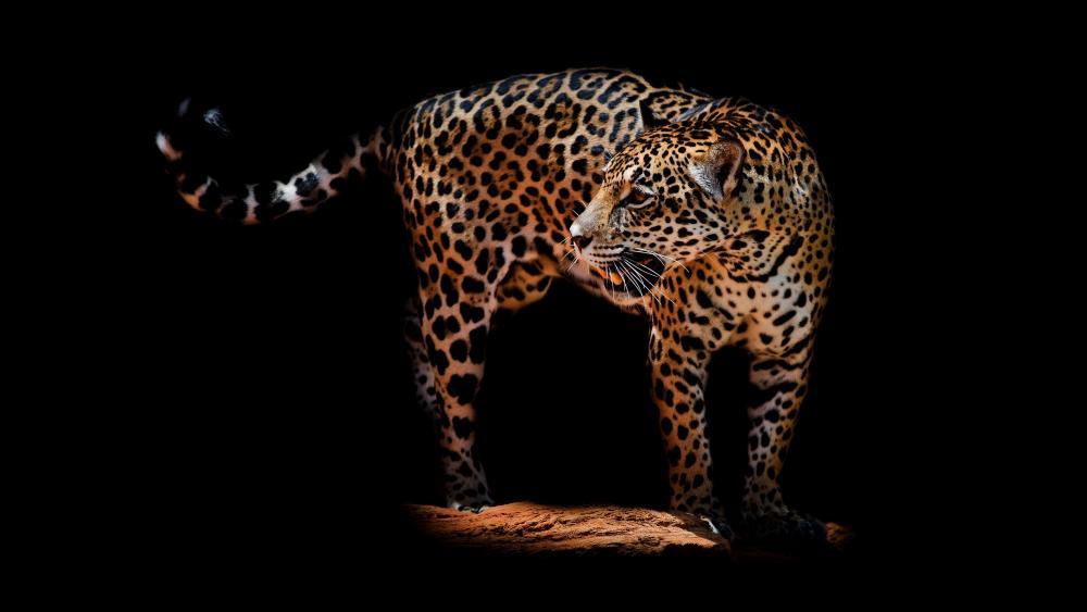 Jaguar wallpaper