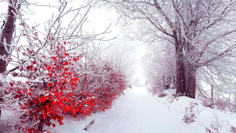 Snowy path wallpaper