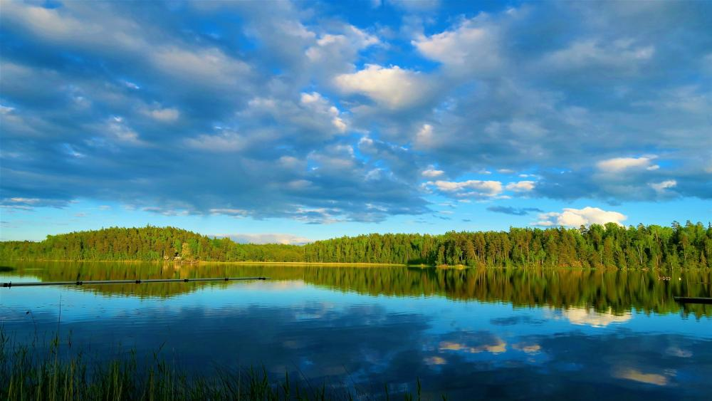 Green forest reflected in a lake wallpaper