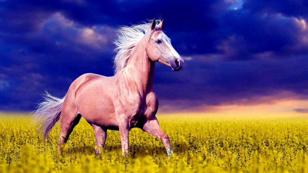 Palomino Horse in canola field wallpaper