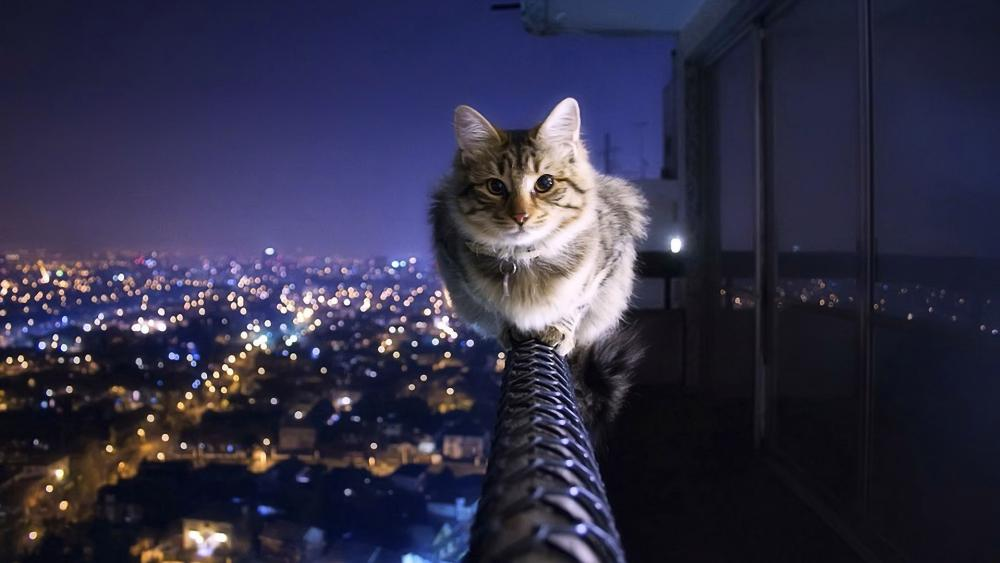 Cat on the balcony railing above the city wallpaper