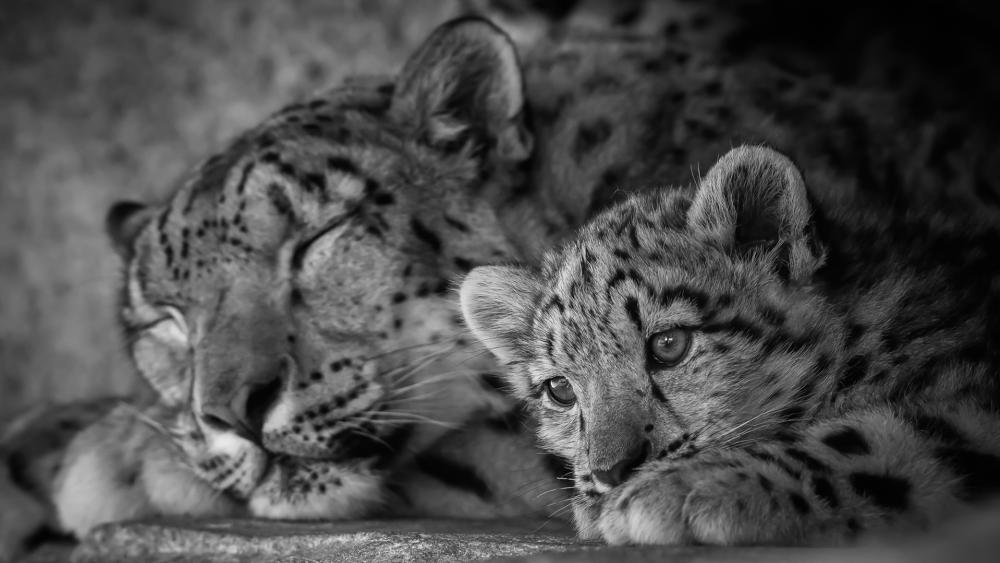 Cute leopard cub with his mom wallpaper