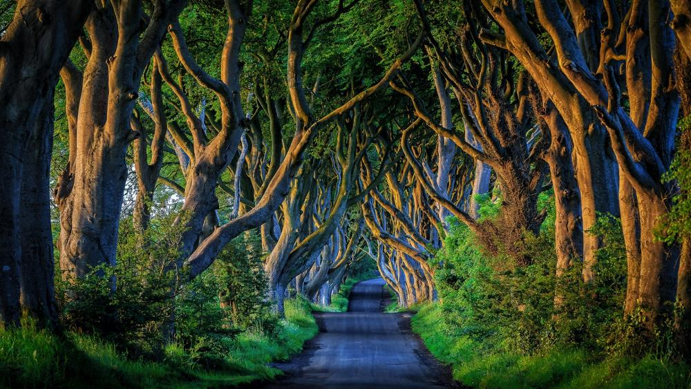 Dark Hedges (England) wallpaper