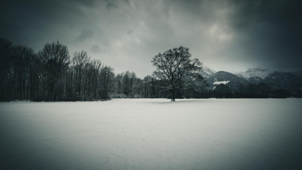 Monochrom winter scenery wallpaper