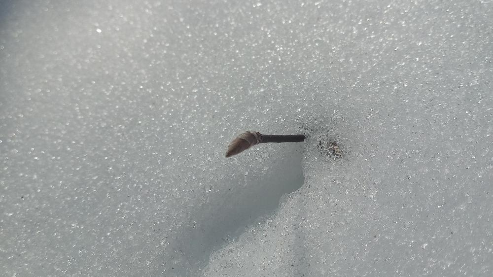Deep snow wallpaper