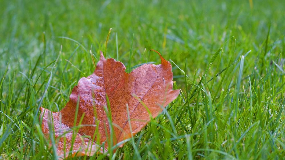 Ground leaf wallpaper