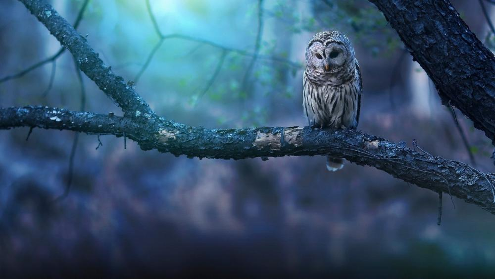 Great grey owl sits on a branch wallpaper