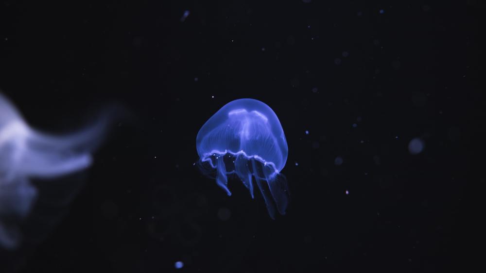 Jellyfish in Ozeaneum Stralsund (Germany) wallpaper