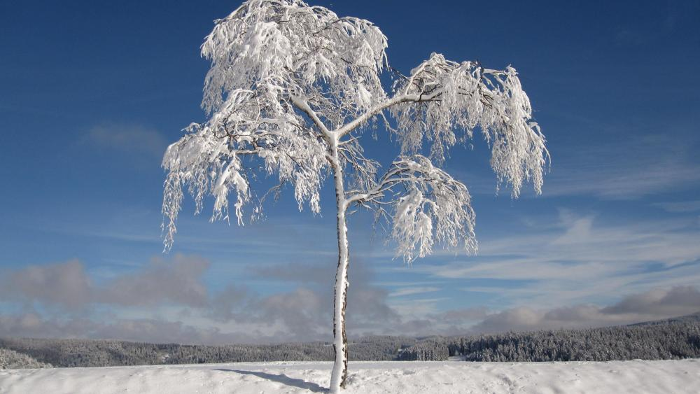Snowy solitary tree wallpaper