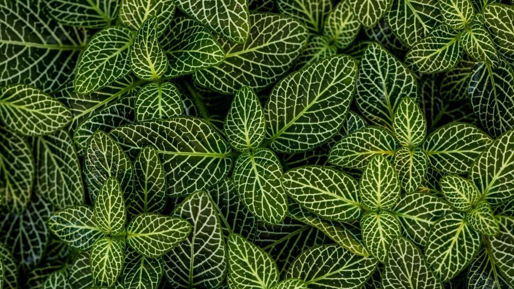 Striped green leaves wallpaper