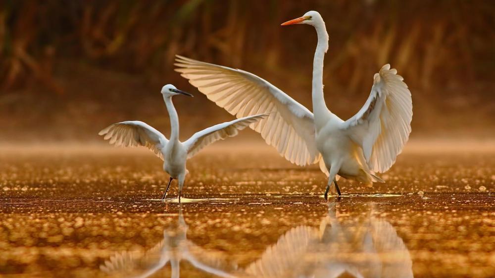 Eastern Great Egret wallpaper