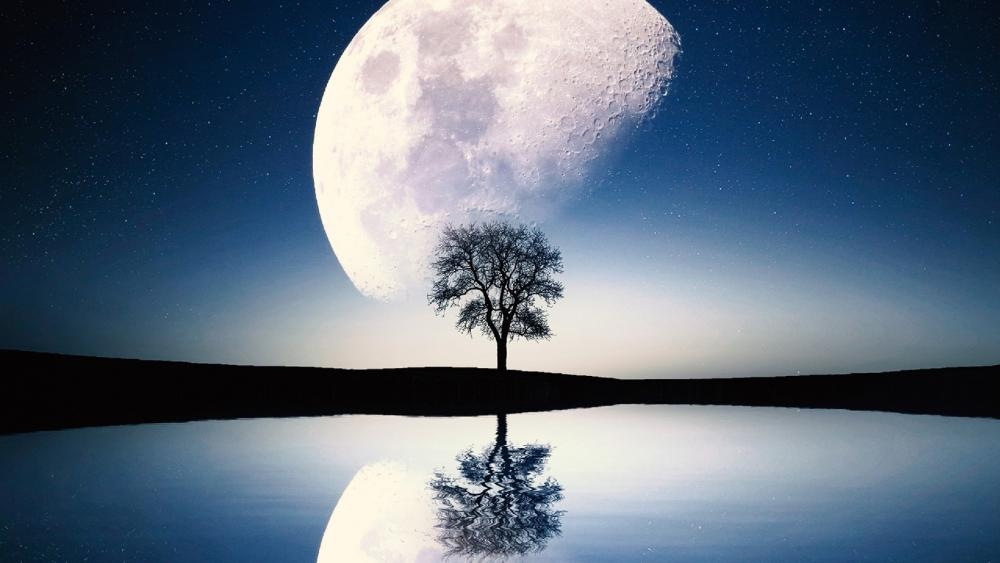 Solitary tree and moon 🌕 wallpaper