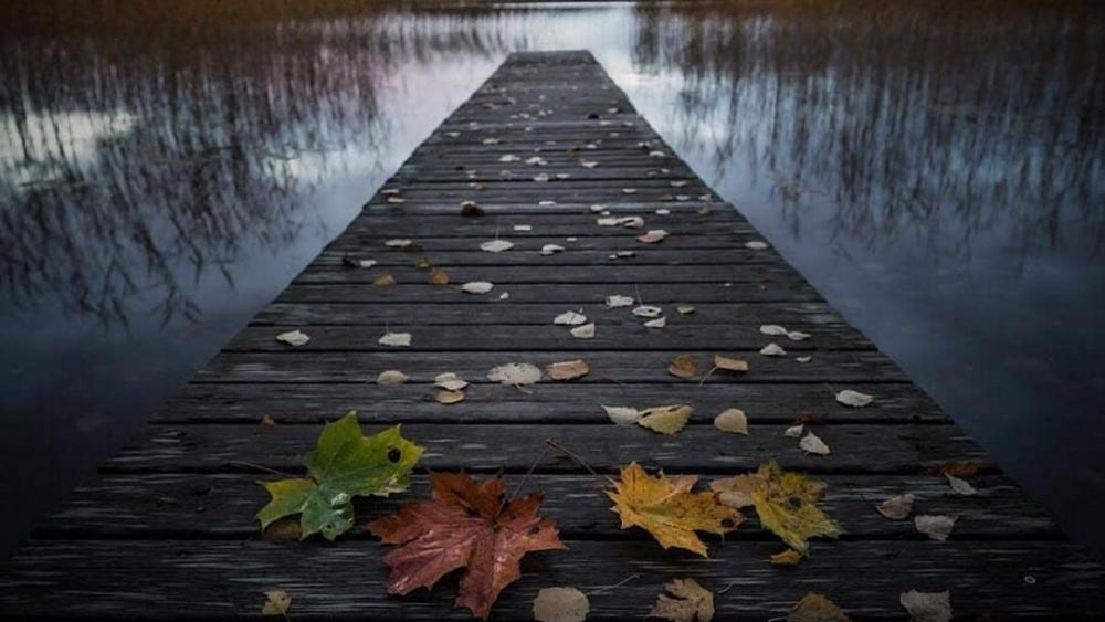 Autumn leaves on a pier wallpaper
