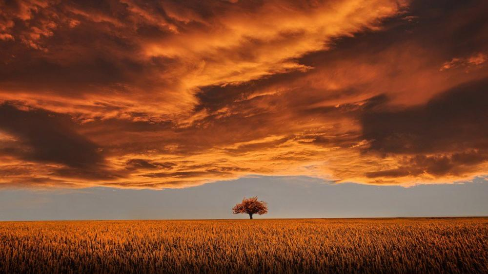 Lonely tree on the plain wallpaper