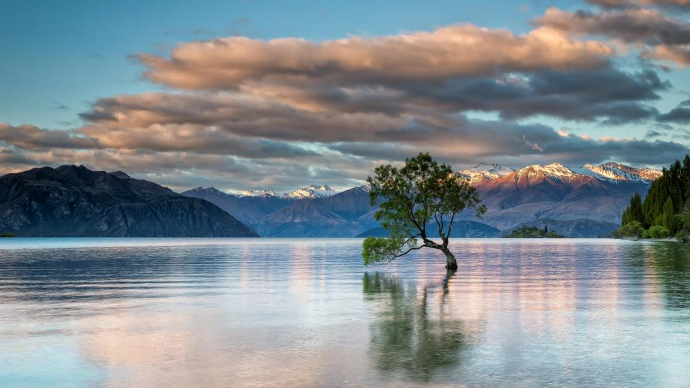 Lone Tree of Lake Wanaka wallpaper